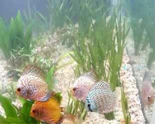 K K Pets Aquarium Pets And Aquarium In Anad Nedumangad Trivandrum Pets Shop In Anad Trivandrum